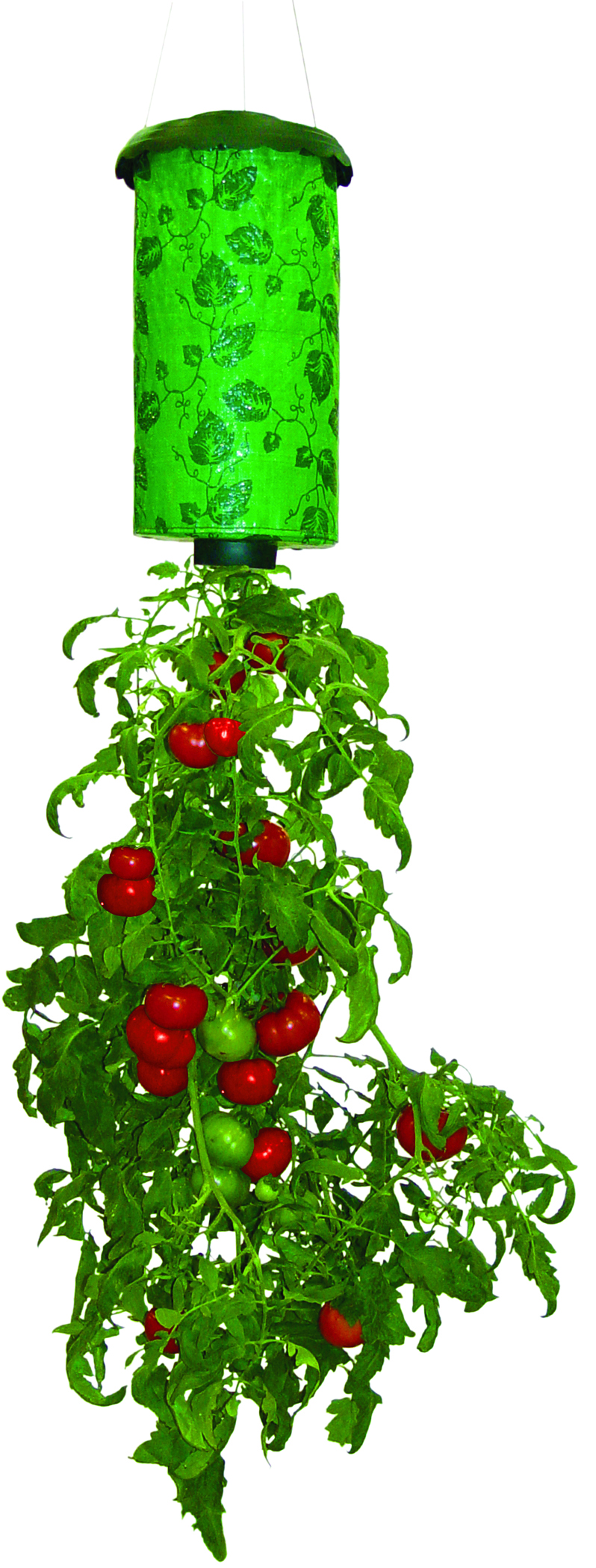Six gifts to spread the love of growing rosebud magazine - Can a plant grow upside down ...