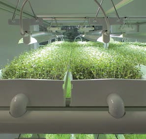 How To Set Up Ventilation For Grow Room During Winter