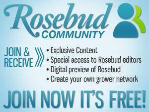rosebud-networking-banner