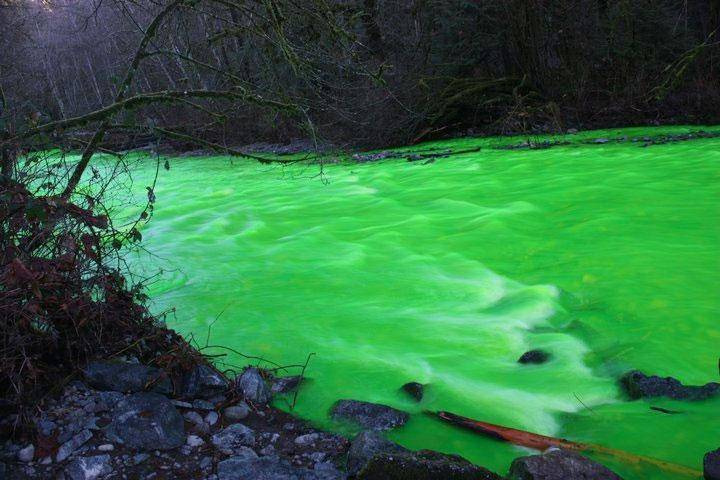 "Newly laid salmon eggs are threatened by the ""green slime."""