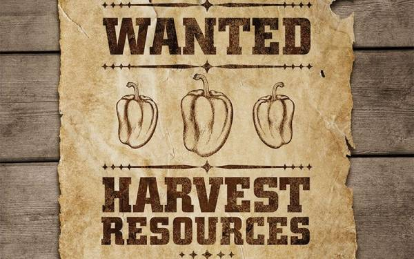 Harvest time requires a search for helpers. How do you find good workers?