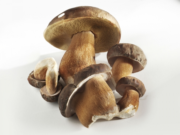Grow your own mushrooms hydroponically!