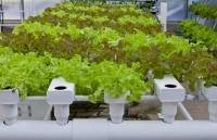 Choosing the right hydroponics system for you can be tough given the variety of growing methods out there