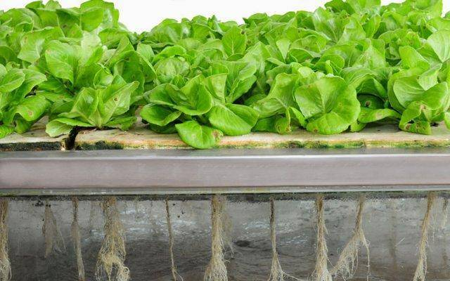 Aeroponics is an efficient but care-intensive hydroponics gardening option.