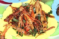 Fried grasshoppers are a common food in some parts of the world.