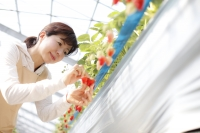 Japan's farmers are getting into hydroponics.