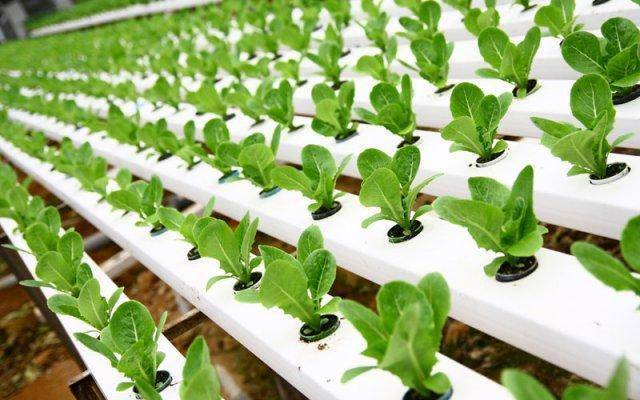 Hydroponic systems and aquaponics are the future of agriculture.