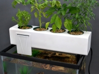 The Blue Green Box turns your aquarium into an aquaponic garden.