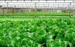 Hydroponics is the wave of the future for organics.