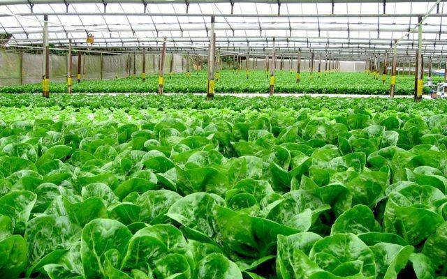 Archi-ponics Certified Organic Hydroponic Systems - Archi-ponics