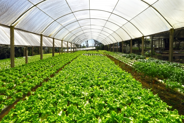 Good Life Farms Enjoying The Good Life Thanks To Hydroponics