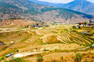 The Bhutan countryside will be all-organic.