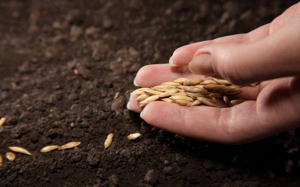 Choosing the right seeds is an important step in cultivating a healthy crop.