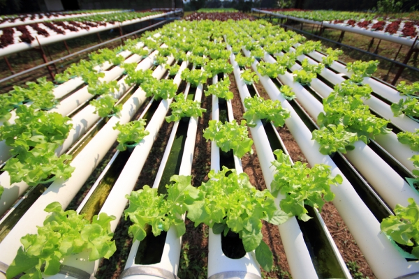 Among agricultural practices, hydroponics reigns supreme in execution if not popularity (yet).