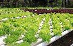 Hydroponics will continue to expand worldwide as more people experience its benefits.