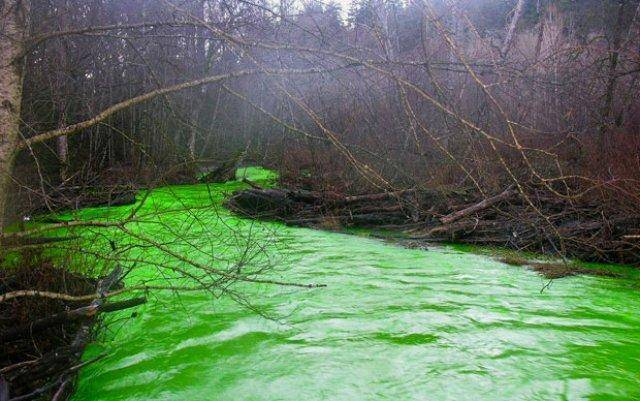 When the Goldstream River glowed green