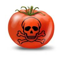 "Do Hydroponics Companies Make Us Grow Poisoned ""Tomatoes?"""