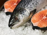 Genetically modified salmon could be the first mutant food animal to make it to your plate.