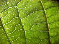 Plant vascular systems help transport lifeblood throughout the plant.