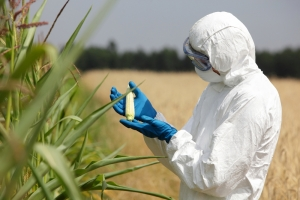 Atrazine is sprayed on corn and carries serious health risks.