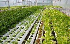 Gotham Greens is growing produce in a facility much like this one.