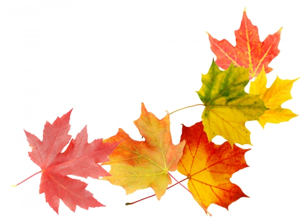 The changing colors of autumn leaves invites reflection on the nature of life.