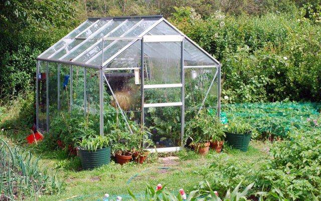 If you have a secure location, then growing in a greenhouse during outdoor season can be a lot of fun.