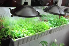 Vancouver Green Grocer Uses Hydroponic Systems To Grow Fresh Foods