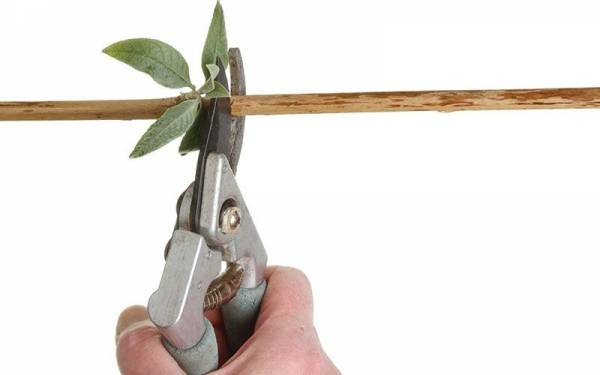 Get the best out of your crop with some smart pruning practices.