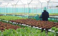 Hydroponic farming is one of the most inviting business ventures in the current marketplace.