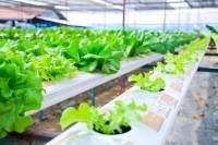 Hydroponic gardening is a good career option for ex-military transitioning to civilian life.