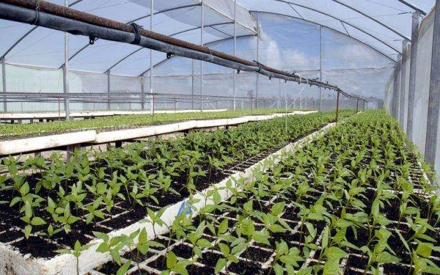 Get your hydroponics business up and running by planning effectively