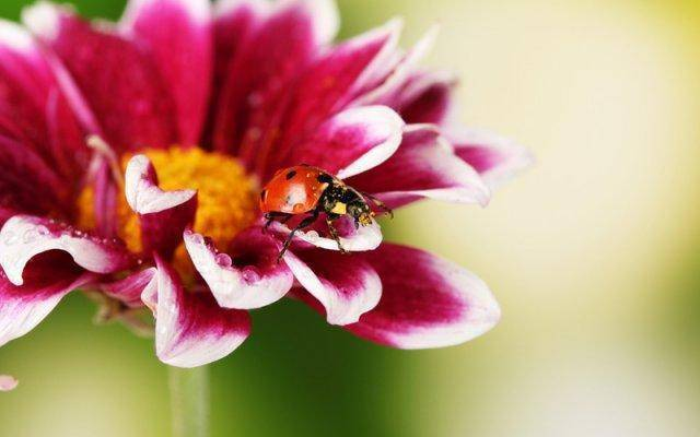 Small, common details of our lives, like a ladybug on a flower, can be beautiful if we are fully present.