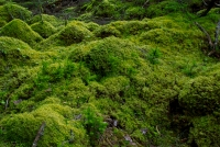 Did you know you could use moss as an eco-friendly growing medium.